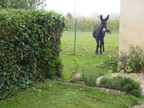 Notre âne, Coquin